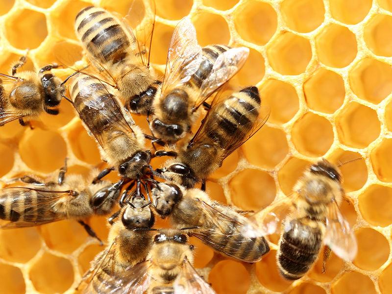 Ateliers de sensibilisation à l'apiculture